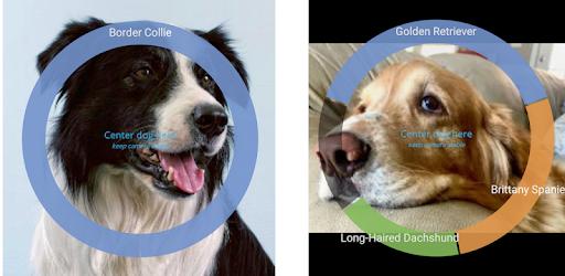 Identify Dog Breeds Pro MOD APK 22
