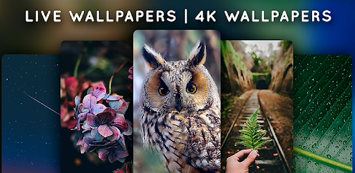 Live Wallpapers – 4K Wallpapers v1.4.2 (Premium)