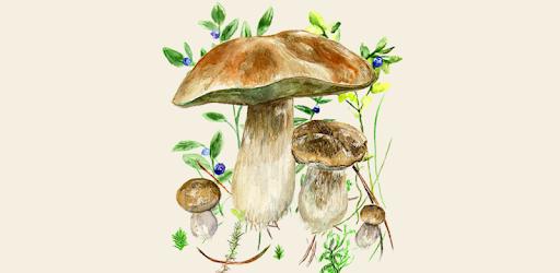 Mushrooms app MOD APK 72 (Unlocked)